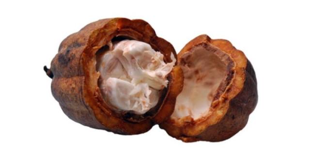 Untul de cacao face minuni