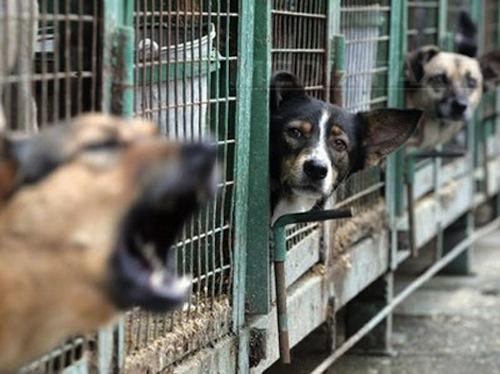 IML: Copilul care a murit muşcat de câini avea sute de plăgi